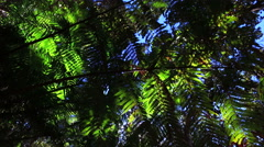 Rainforest plants and leafs from below. Slider footage! Stock Footage