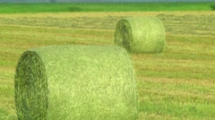 Hay in the coils. Farmers field full of hay bales. Stock Footage