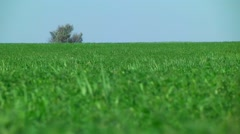 Field of growing food. Farm. Production Stock Footage