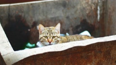 Cat in trash can Stock Footage