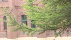 Tree flutters in the wind, the movement of the camera Stock Footage