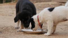 Two puppies eating from milk bowl in the garden - stock footage