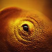 Lizard's eye Stock Photos