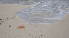 Starfish on sandy beach flushing away into the sea Stock Footage