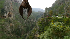Majestic Owl Flying through a Canyon on Crete Stock Footage