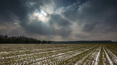 4k timelapse of young cereal field under cloudy sky at early springtime Stock Footage