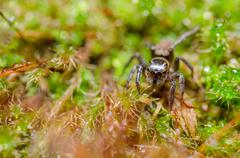 Spider in green nature background - stock photo