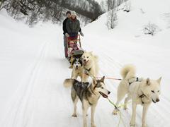 Family on a dog sled Kuvituskuvat