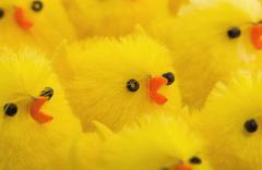 Stock Photo of Abundance of easter chicks, selective focus