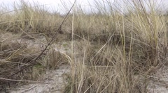 Dog POV running through Dune grass Stock Footage