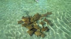 School of rays in the water. Atlantis Resort - Nassau, Bahamas - stock footage