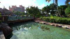 School of rays in the Atlantis Resort aquarium - Nassau, Bahamas - stock footage