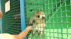 Children feeding cute monkey in zoo. Monkey eating pumpkin seeds Stock Footage