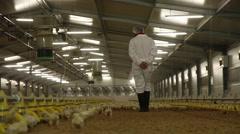 Worker walking in raising chickens farm, slider shot Stock Footage