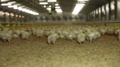 Raising chicken hens farm, slider shot Stock Footage