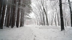 Walking through fresh snow along forest of tall pines.  Ronin Stabilized shot Stock Footage