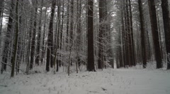 Beautiful forest of straight tall pine trees in the winter as fresh snow falls Stock Footage