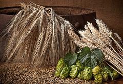 Illustration of hops, barley and wheat on the old barrel Stock Illustration