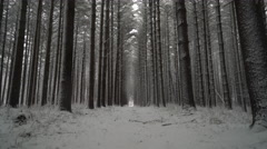 Snow falling in the forest, calm peaceful shot down trail between pines Stock Footage
