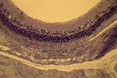 Retina - stock photo