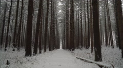 Peaceful walk through a forest of tall pines as fresh snow falls, ronin Stock Footage
