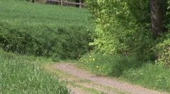 Dog Running Down A Girl Stock Footage