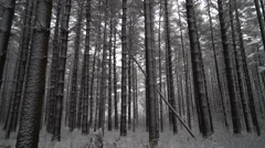 Winter forest scene as camera moves towards forest floor Stock Footage