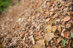 A view of dead leaves Stock Photos