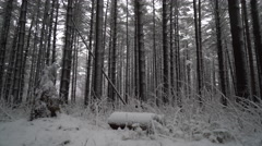 Beautiful Ohio forest covered in snow, crane shot revealing the beauty - stock footage