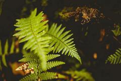 Close up of fern Stock Photos