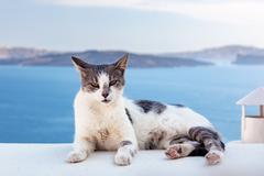 Cat lying on stone wall in Oia town, Santorini, Greece. Aegean sea - stock photo