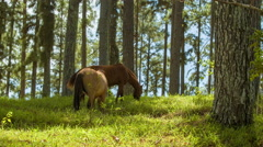 Wild Horses Closeup on Natural Tree Forest Hillside Stock Footage