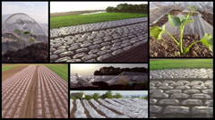 Split screen of melons greenhouse in spring. Stock Footage