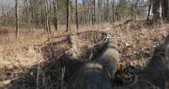 Point of View Scurry Down a Log in the Meadow Stock Footage
