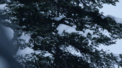 Winter Elk Stock Footage