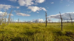 time-lapse photography of the Siberian taiga - stock footage