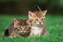 Kittens in a field Stock Photos