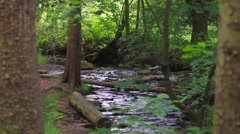 A quiet glen with a small stream running through the trees Stock Footage