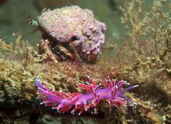 Purple invertebrate Stock Photos