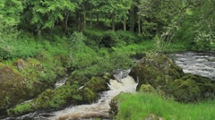 A small glen in the Scottish Borders in summer Stock Footage