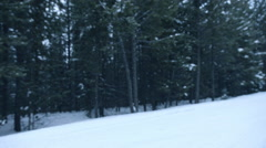 Snowing in the Woods Stock Footage