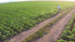 Weed sprinkling on soybean field. Aerial footage. Stock Footage