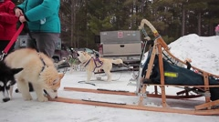 Dogsledding team gets ready Stock Footage