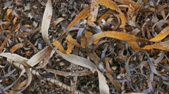 Rust texture shavings metal mountain plant background waste Stock Footage
