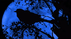 Blue Moon Crow Sitting On Berry Tree Silhouette, 4K Stock Footage