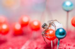 Spider and pins - stock photo