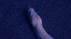 Yellow Piton close-up Stock Footage