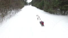 4k aerial dogsledding team Stock Footage