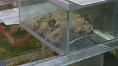 Frogs in aquarium at Bangkok Fish and fresh food green market Stock Footage