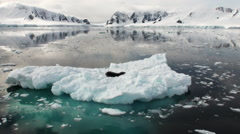 Leopard Seal sleeping on an Iceberg in Antarctica. Stock Footage